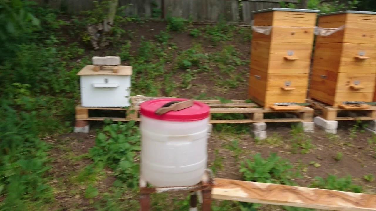 Будет новая пчелосемья.