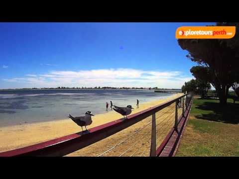 Penguin Island - Perth, Western Australia - Explore Tours Perth