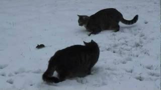 Katze und Maus spielen im Schnee