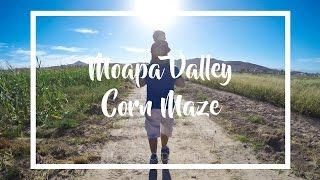 Moapa Valley Corn Maze