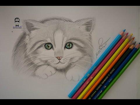 تعلم رسم قطة صغيرة بالرصاص للمبتدئين how to draw cat