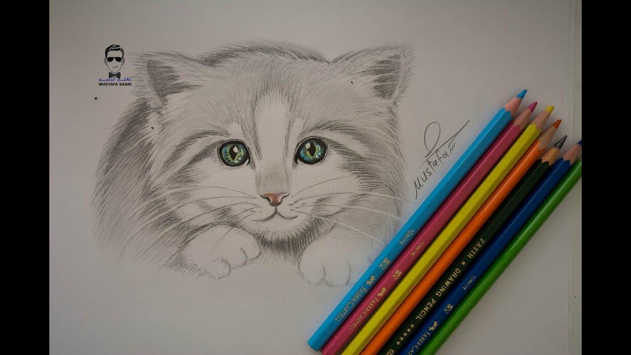 تعلم رسم قطة صغيرة بالرصاص للمبتدئين how to draw cat  youtube