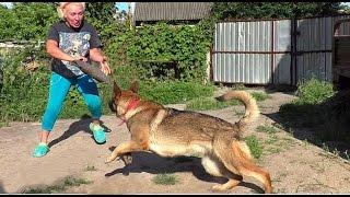 Дрессировка Собак. Железная Хватка Юты. Dog Training. German Shepherd Utah. Одесса.