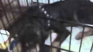 Mckamey Animal Care & Adoption Center | 4500 N. Access Rd. | Chattanooga, Tn 37415