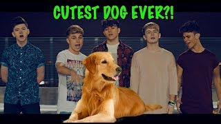 Download IS THIS THE CUTEST DOG EVER?! 😍🐶 MP3 song and Music Video