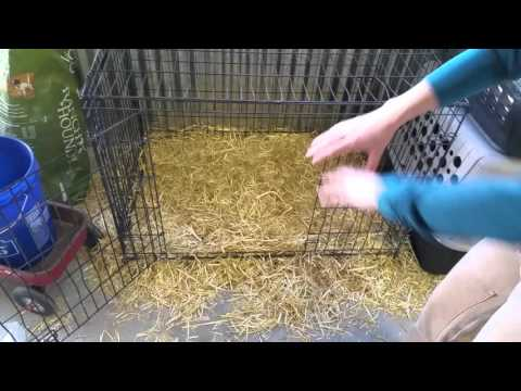 Puppy raising #2 crate training.