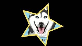 Ха ха хаски)))смешные картинки с хаски.husky dog