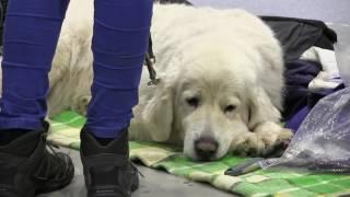 Pies nie jest zabawką! (prod. Magnes.TV)