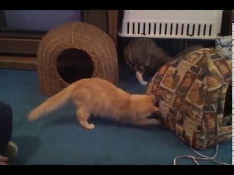 cats   cats are simply funny, clumsy and cute!   funny cat compilation