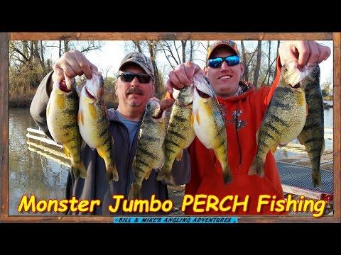 Monster JACK PERCH  Fishing On Lake ERIE