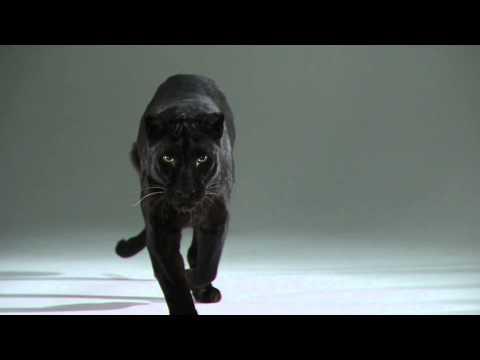 Duality Redux   Slow Motion Cats Phantom Camera Series