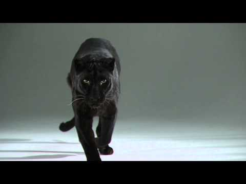 Duality Redux | Slow Motion Cats Phantom Camera Series