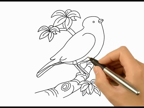 How To Draw A Beautiful Bird And Coloring Idea Drawing Ideas For