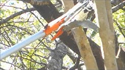 How to cut a tree branch without a ladder for $37: Bunnings Hortex Pole Saw Pruner Review