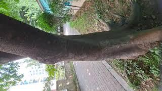 단단한 나무의 기상