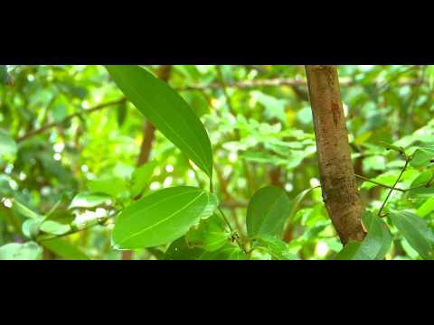 Ayubowan Sri Lanka 9 - Dambulla