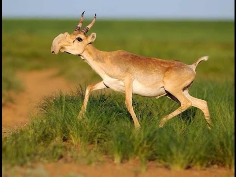 Did You Know? 120,000 Antelopes Died