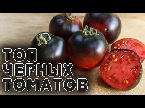 Лучшая 20-ка черных томатов и перцев | урожайные | описание | томатов | черных | черные | томаты | лучшие | сорта