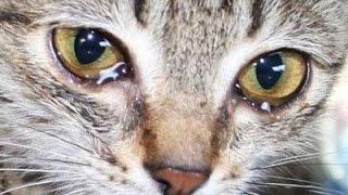 Самые трогательные видео с Животными. ДО СЛЁЗ!!! #1