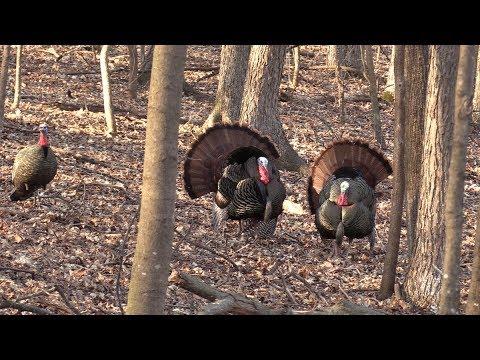 Turkey Hunting Wisconsin
