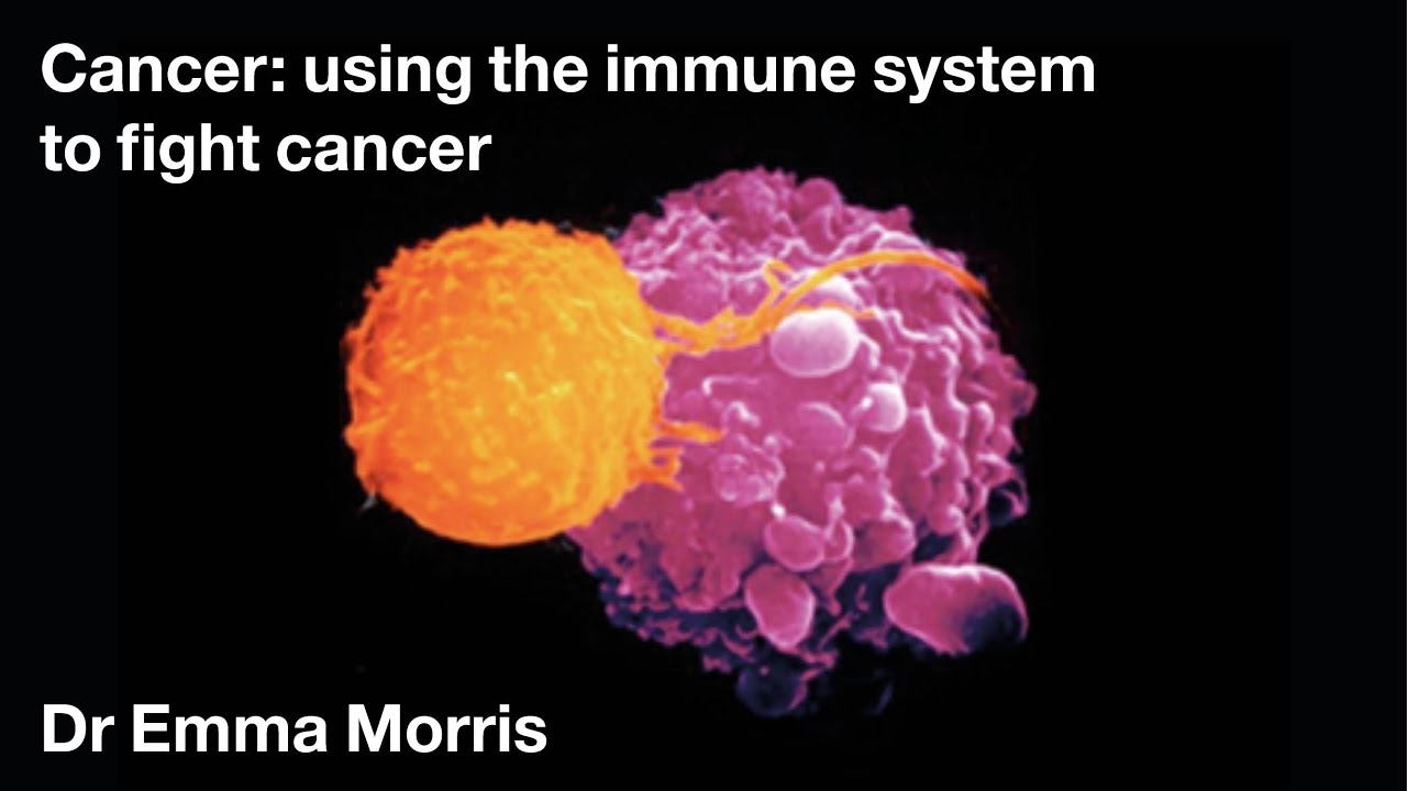 Cancer Using The Immune System To Fight Cancer Dr Emma