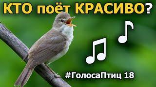Какие птицы красиво поют? #ГолосаПтиц 18