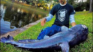 MONSTER CATFISH from a POND!!