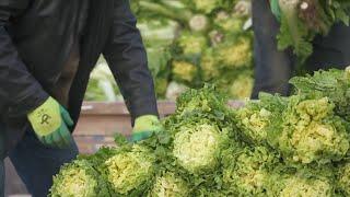China's Kashgar ensures vegetable supply amid COVID-19