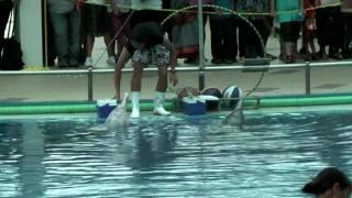 Dolphin Show, Sentosa, Singapore