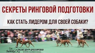 Секреты ринговой подготовки собак. Контакт хозяина с собакой. Как стать лидером для своей собаки?