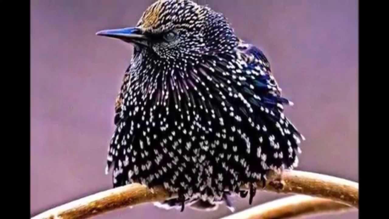 Download Las aves mas bonitas del mundo