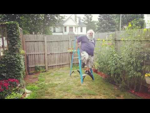 Ladder Leap
