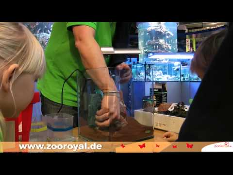 Einrichten eines Dennerle Nano KidsCube Aquarium