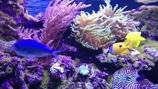 Потрясающий подводный мир в океанариуме Wonderful beautiful underwater sea in oceanarium Alinka VLOG
