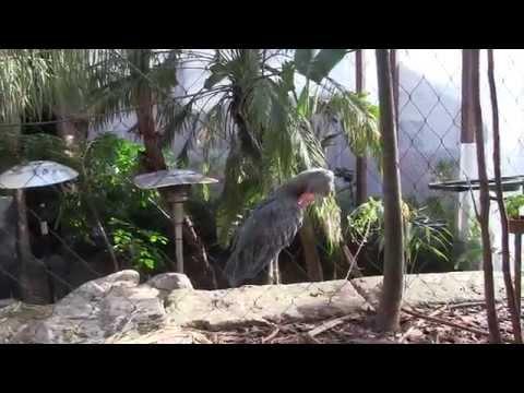 Dallas World Aquarium: Birds, Fish, Price, Guide