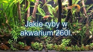 #akwarium Jakie ryby w akwarium 260l?