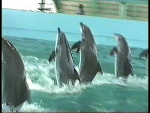 Gulfport, Mississippi - beach and the aquarium - dolphins.