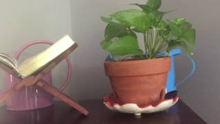 Tour of My Pothos Houseplants & How I Care for Them
