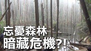 忘憂森林 暗藏危機