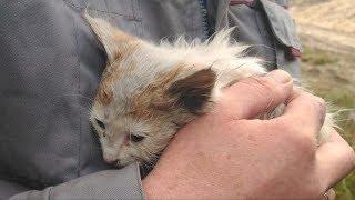 Семья приехала в лес по грибы, когда услышала плач брошенного кем то котёнка