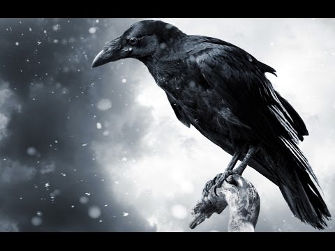 The behavior of a flock of crows