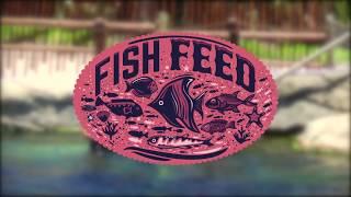 uShaka Fish Feed - Sea Animal Encounters Island
