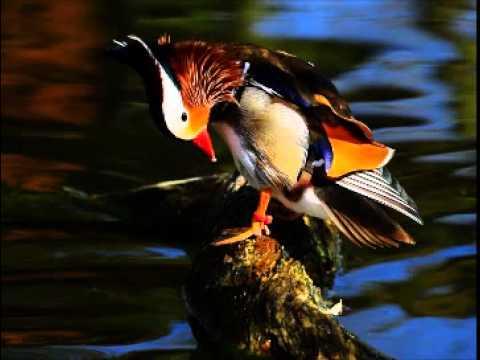 Les plus beaux oiseaux du monde youtube for Le plus beau canape du monde