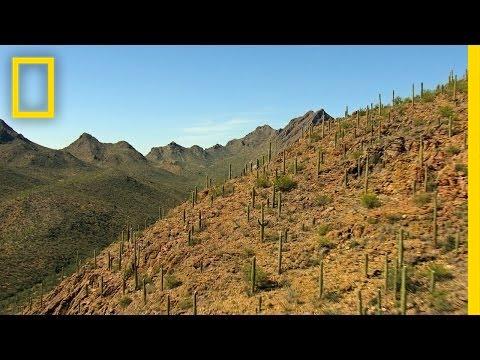 Best of Saguaro National Park | America's National Parks