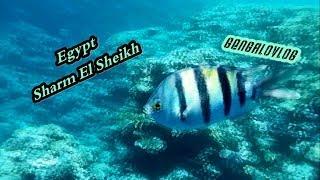 Отдых Шарм Эль Шейх - Часть 2(Подписывайтесь , ставьте лайки , комментируйте !, 2014-05-10T15:32:43.000Z)
