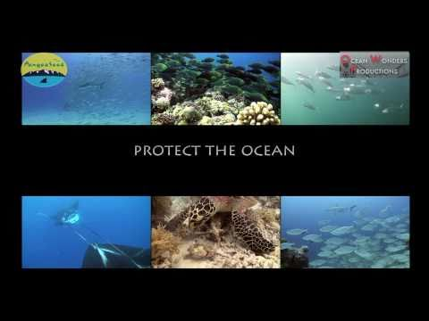 NEW PANGEA SEED VIDEO - Hunting and Feeding in Palau