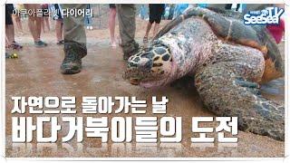 바다에서 구조된 거북이들 제주바다로 돌아가는날 잘살거라…