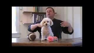 Dog Training - The Ultimate Guide To Coming When Called