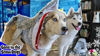 Husky Baby Shark | Cute Dog Halloween Costumes