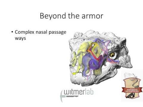 Thyreophora II: Ankylosauria